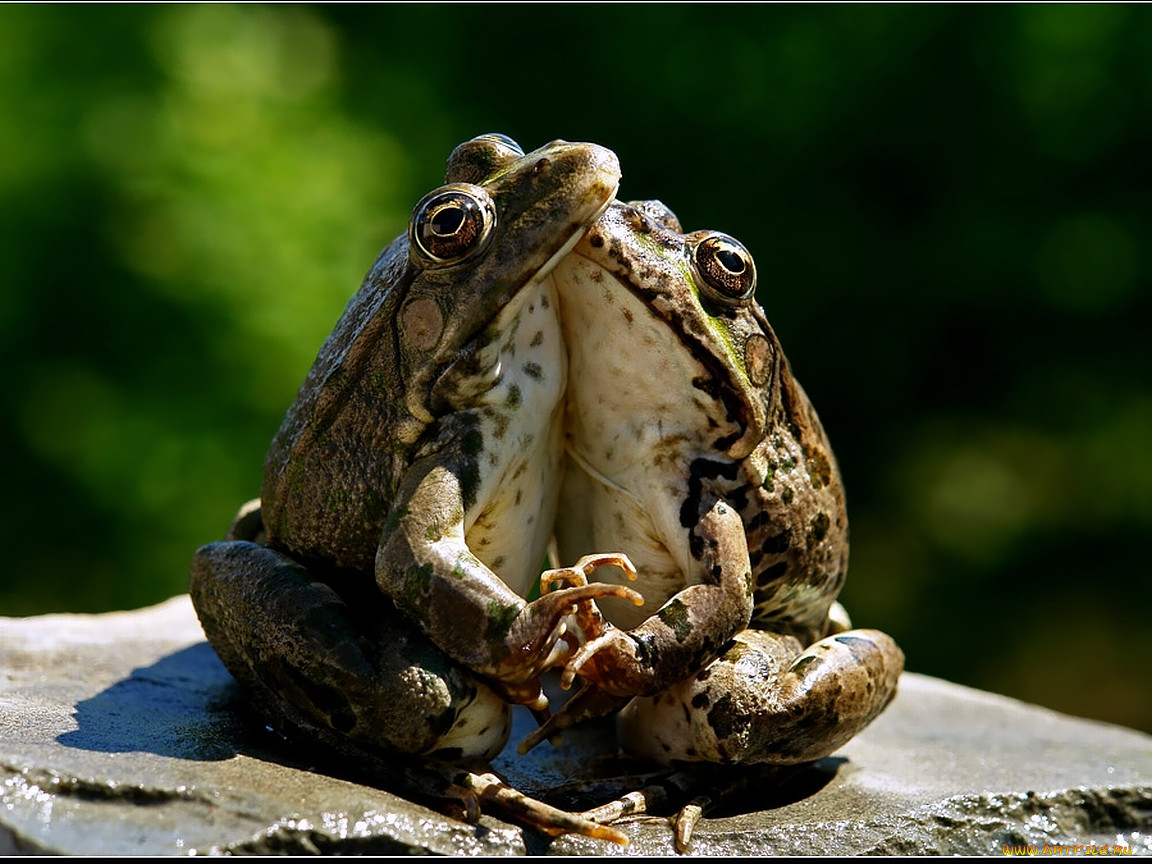 Поцелуй лягушку картинка